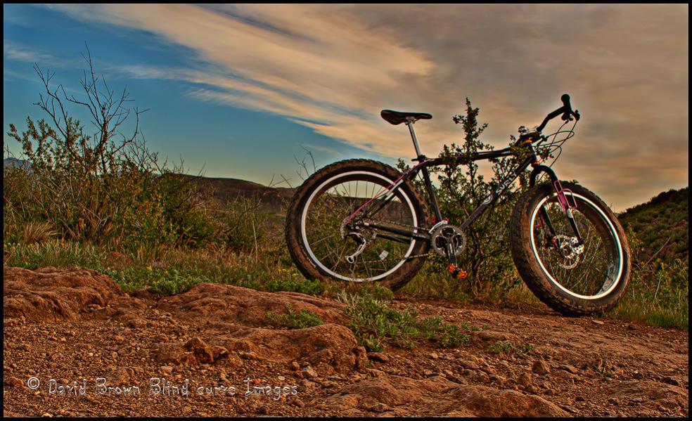 Daily fatbike pic thread-pugs-south-table-mountain.jpg