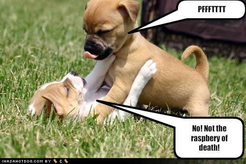 Name:  pup4.jpg Views: 3552 Size:  33.2 KB