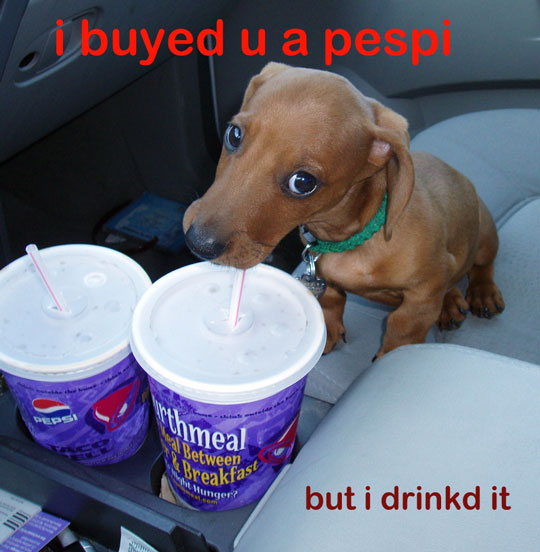 just how bad is Kona?-pup8.jpg
