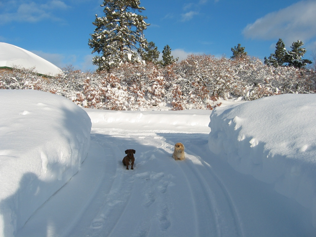 Forget bikes...-pups-snow.jpg