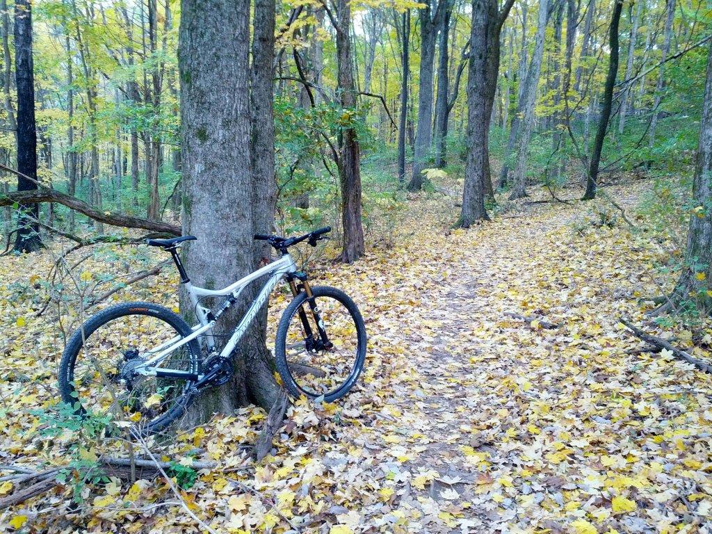 Post Pics of your Fall Foliage!!-qn1irjg.jpg