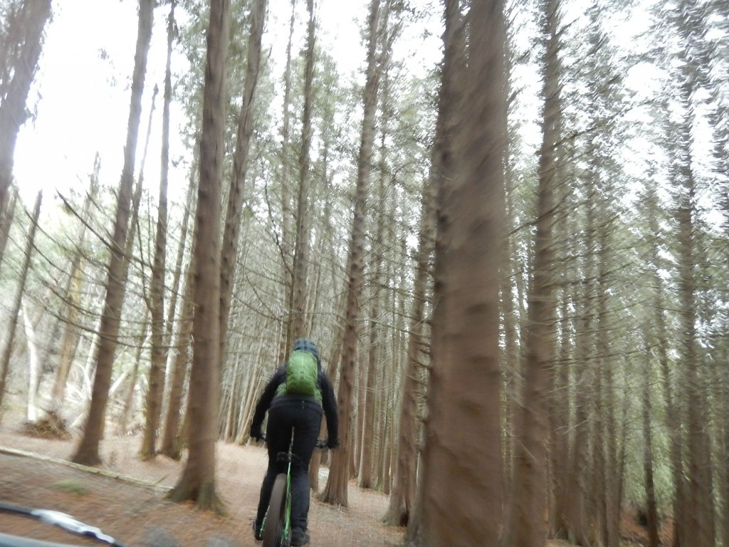Local Trail Rides-qod45xs.jpg