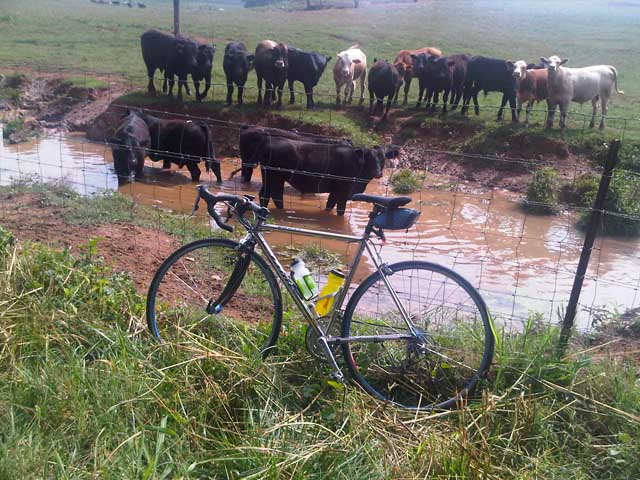 Post Pictures of your Steel Bikes!-quest_and_cows.jpg