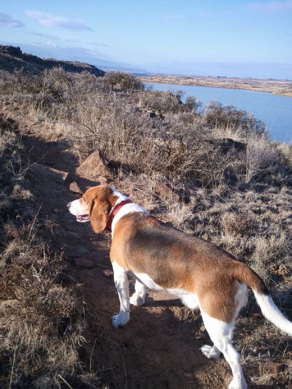Quincy Lakes RR-quincy-lakes-trail-hound.jpg