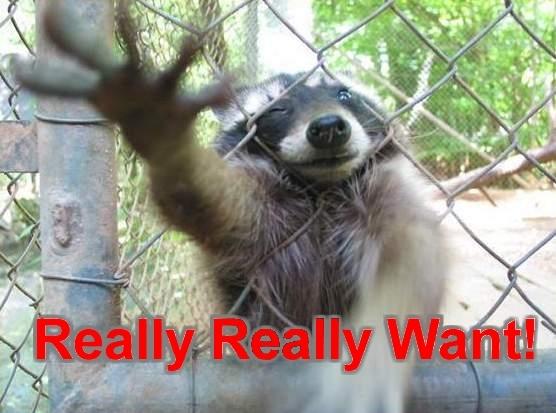 2013 Salsa Warbird, Ridden, Reviewed.-raccoon_really_really_want.jpg