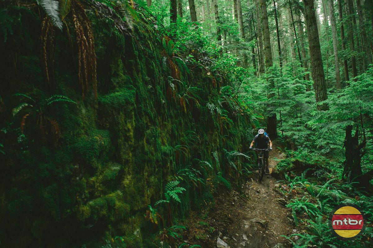 Rain Forest Wall