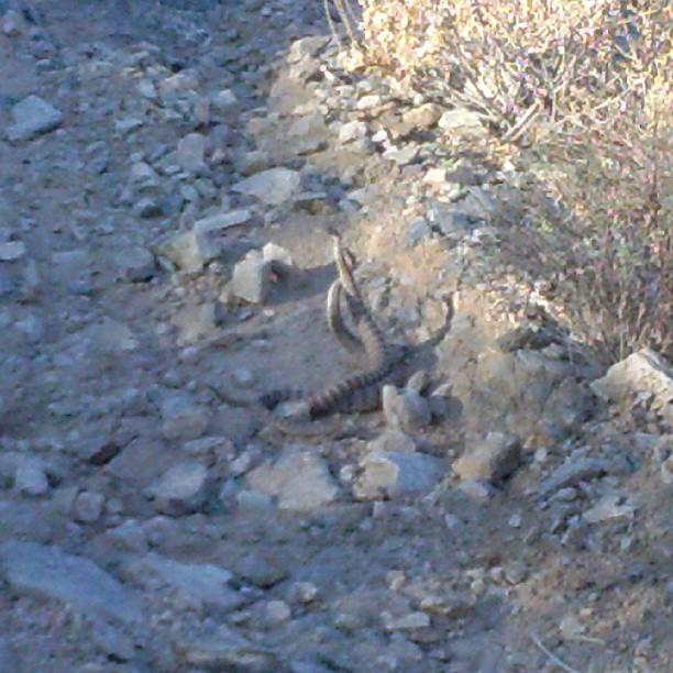 Speaking of rattlesnakes-ratt.jpg