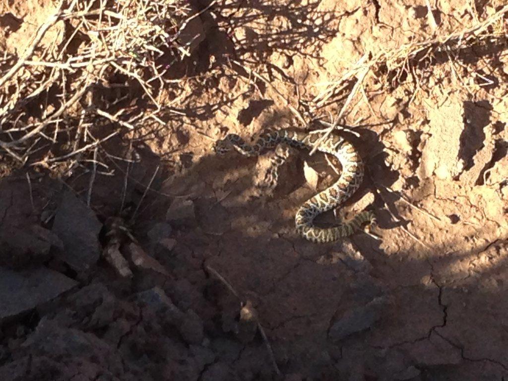Snake time-rattler.jpg