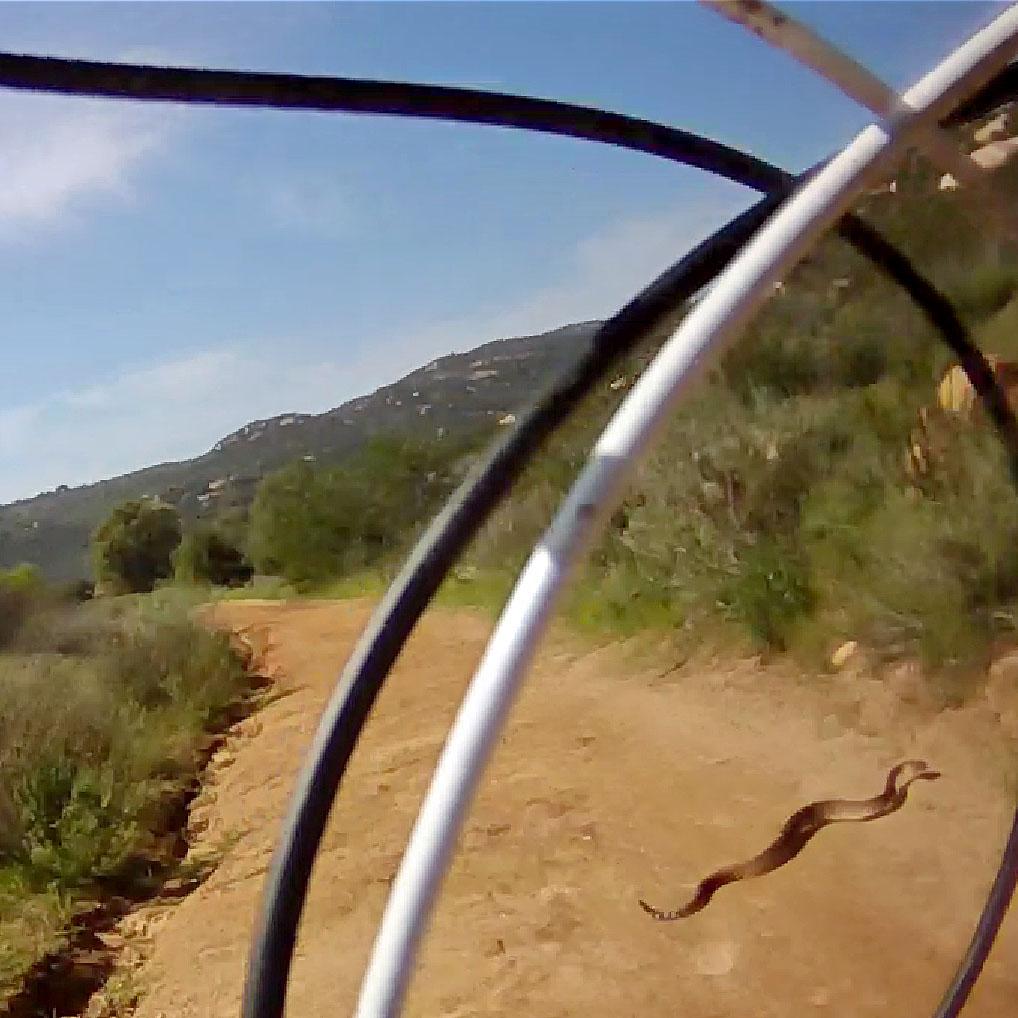 Who's run over a Rattler?  now that its snake season-rattlesnake.jpg