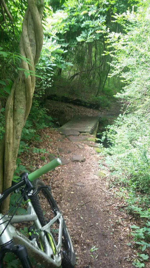 bike +  bridge pics-received_10215524989420917.jpg