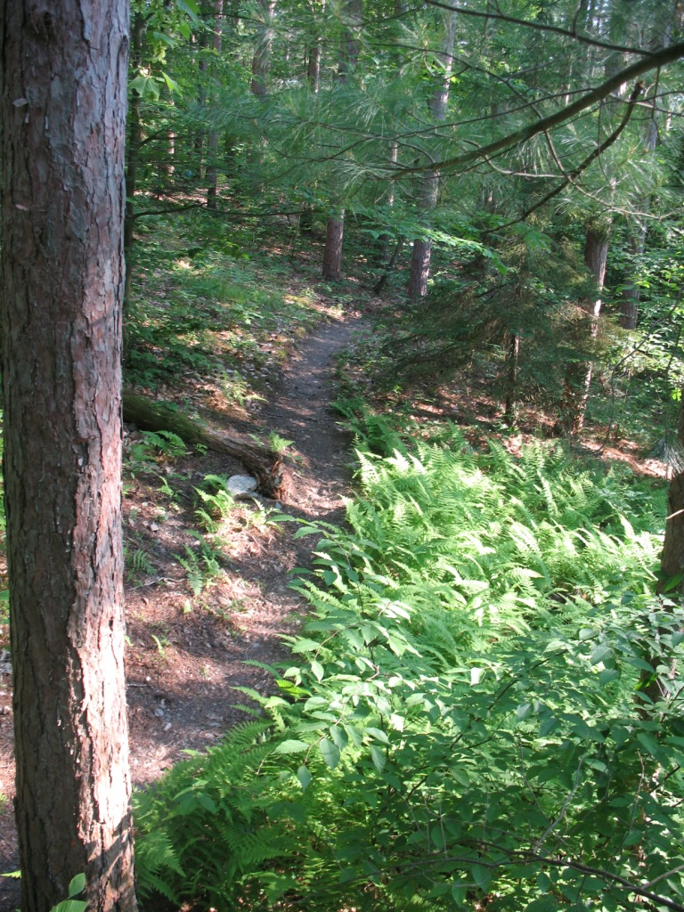Advice: Machine Built Trails-red-pine-2.jpg