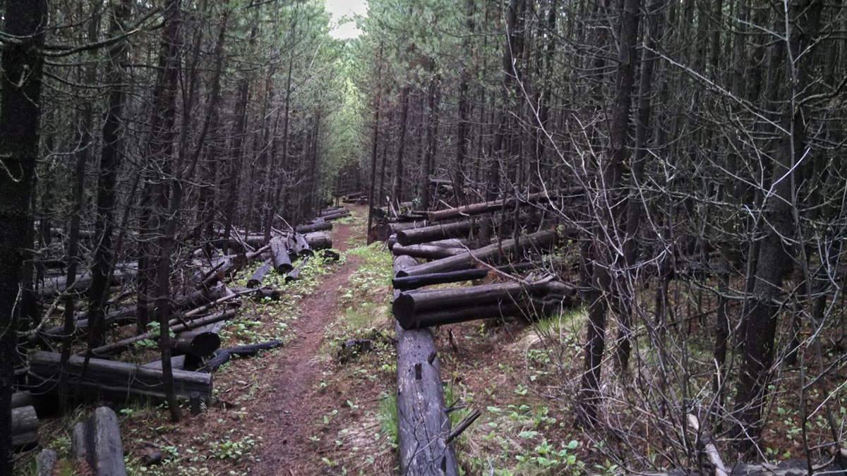 The Redmont and Wagon Road trails have a distinct old-school mountain biking feel.