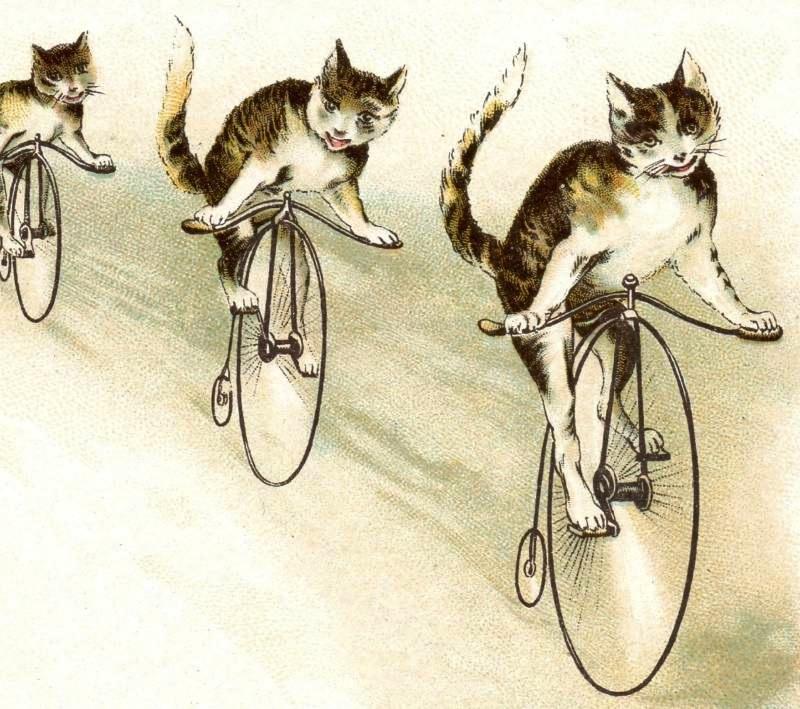 Newsflash: TurtleHawg caught hucking Nicole!!!-rev-bicycle-cats-j-p-coats-thread-rev.jpg