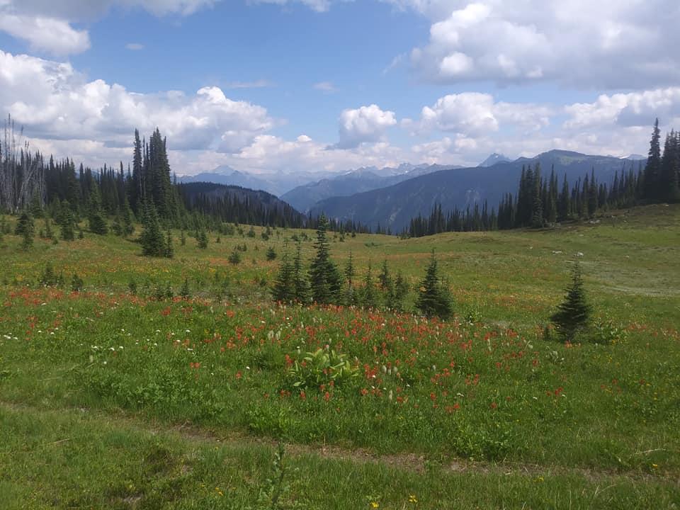 August = Alpine-revy4.jpg