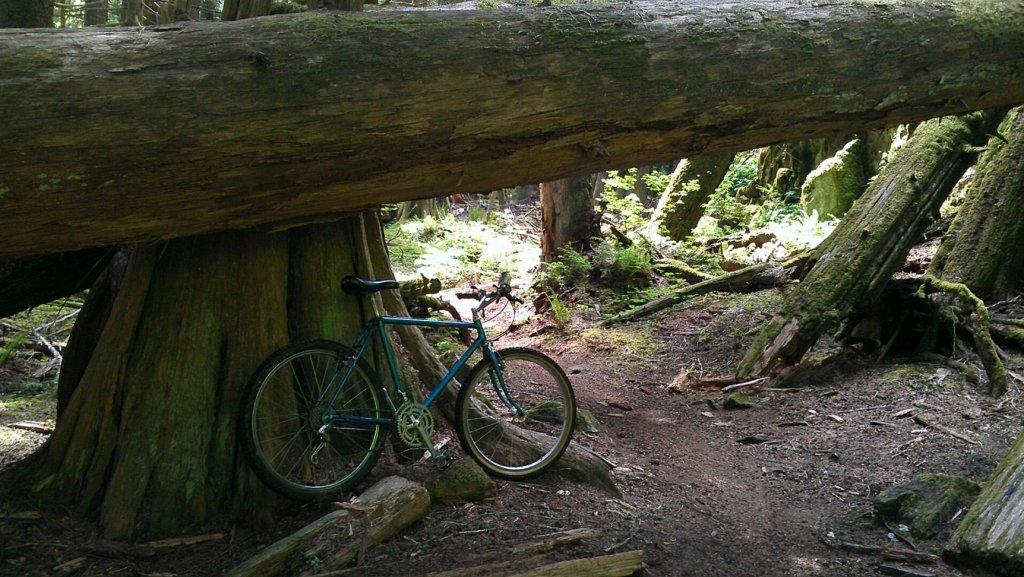 Trail Pics-ritcheyskookum.jpg