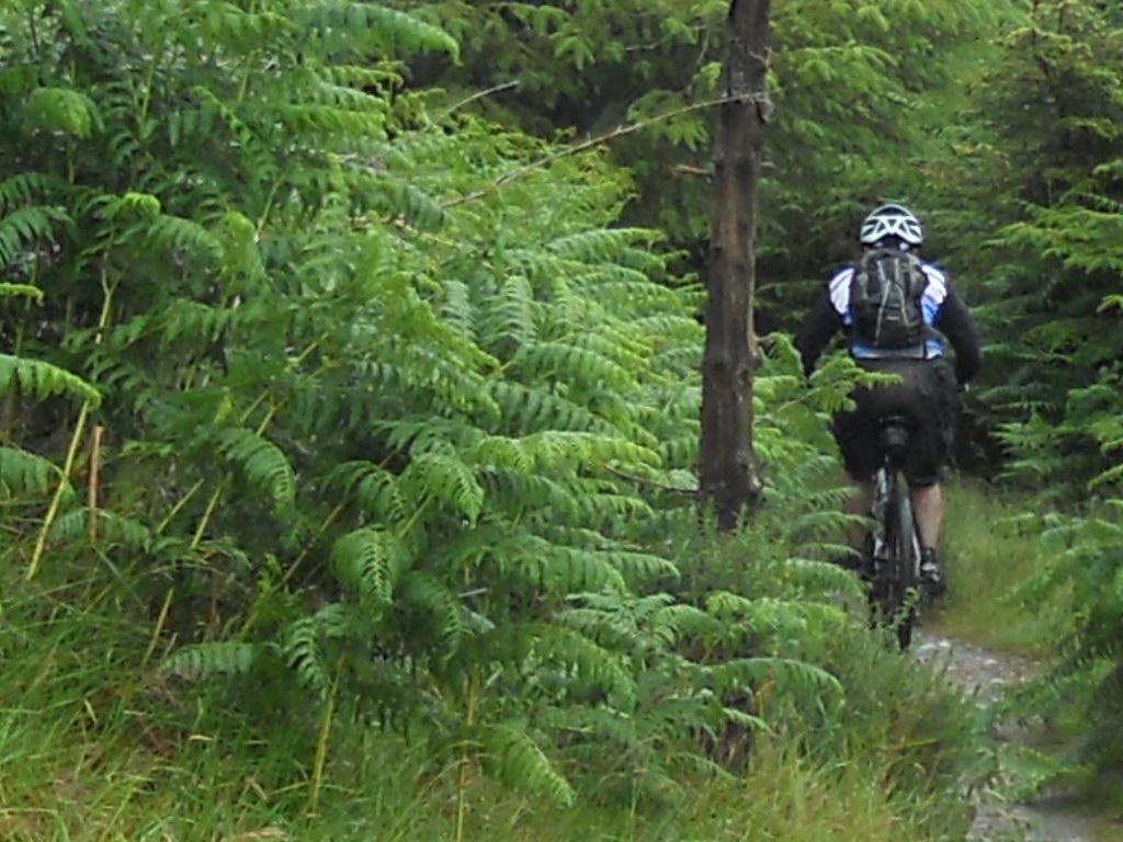 Riding in Ireland-rscn0618.jpg