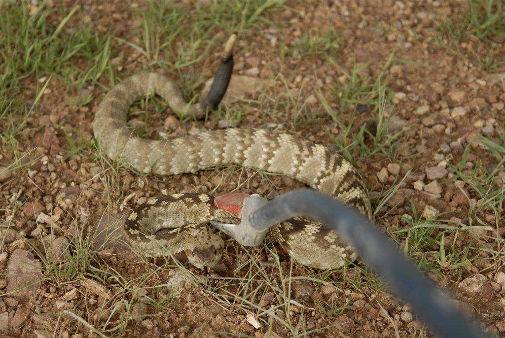 Snakes curbing my exploration-s-11.jpg