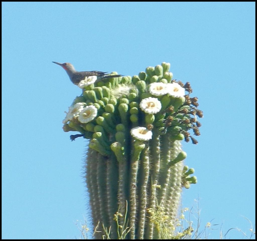 Best riding images of 2012.-saguaro-bird-2-.jpg