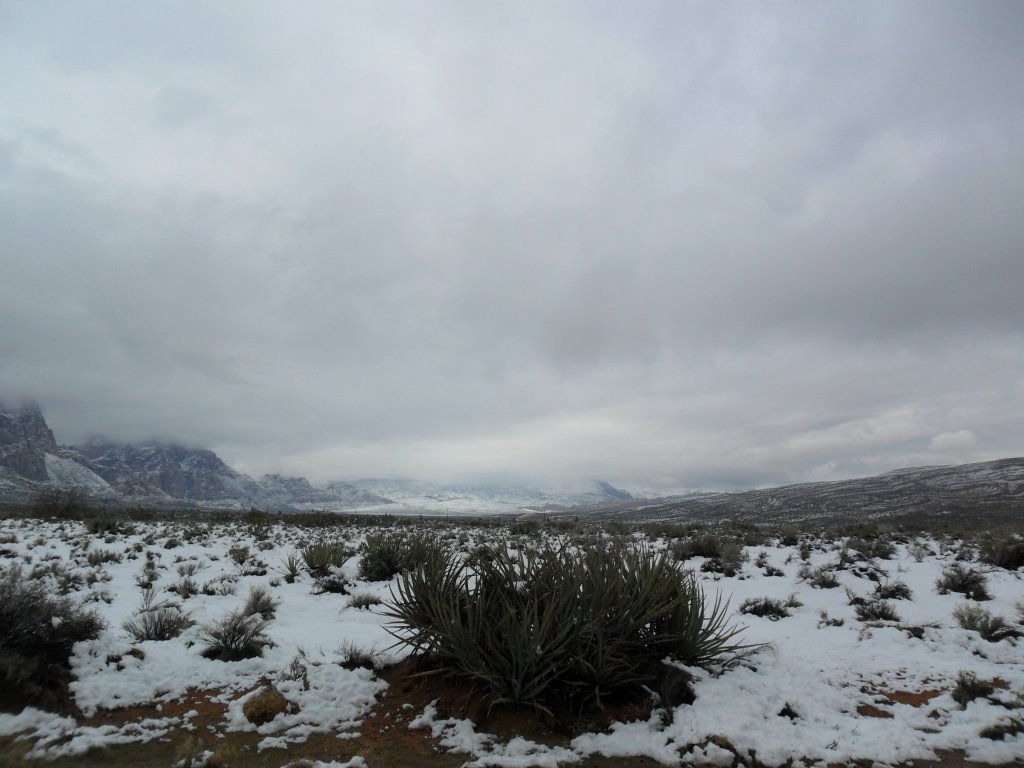 It was beautiful here today. We got a nice snow storm in the early morning hours.-sam_0055.jpg