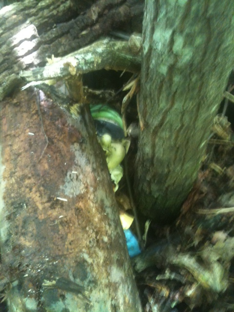 Adventures with the Pisgah Gnome-samfurd-hide.jpg