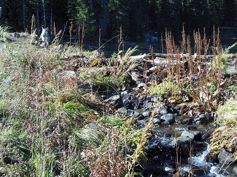 Trail Pics-sandlake-3.jpg