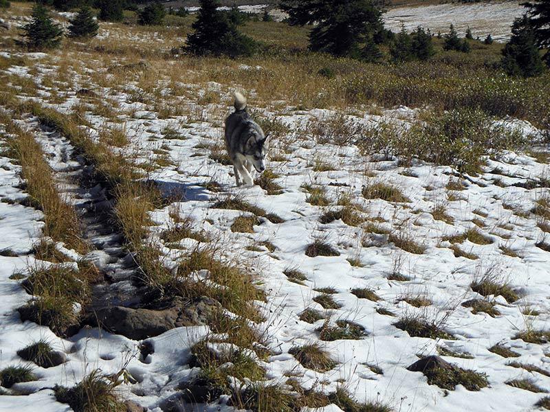 Trail Pics-sandlaketrail-1.jpg