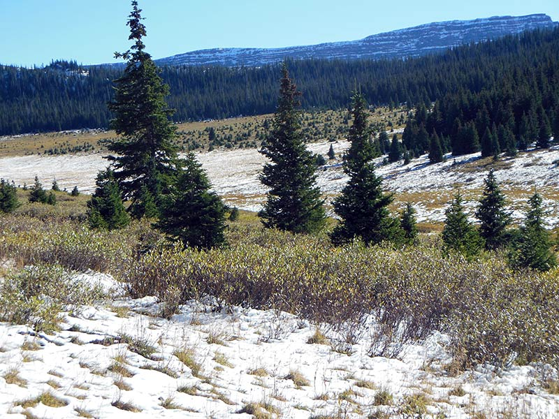 Trail Pics-sandlaketrail-2.jpg