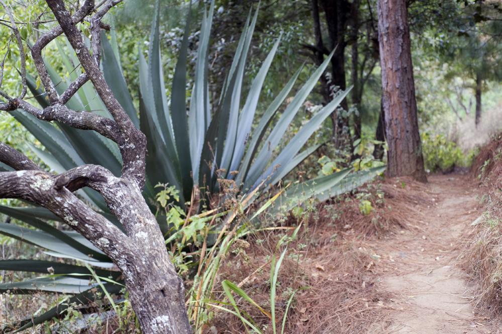 Trail Pics-sanjosecamino.jpg