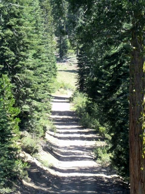 Biking the lifts at Mount Shasta Ski Park-sany0073-640x480-.jpg