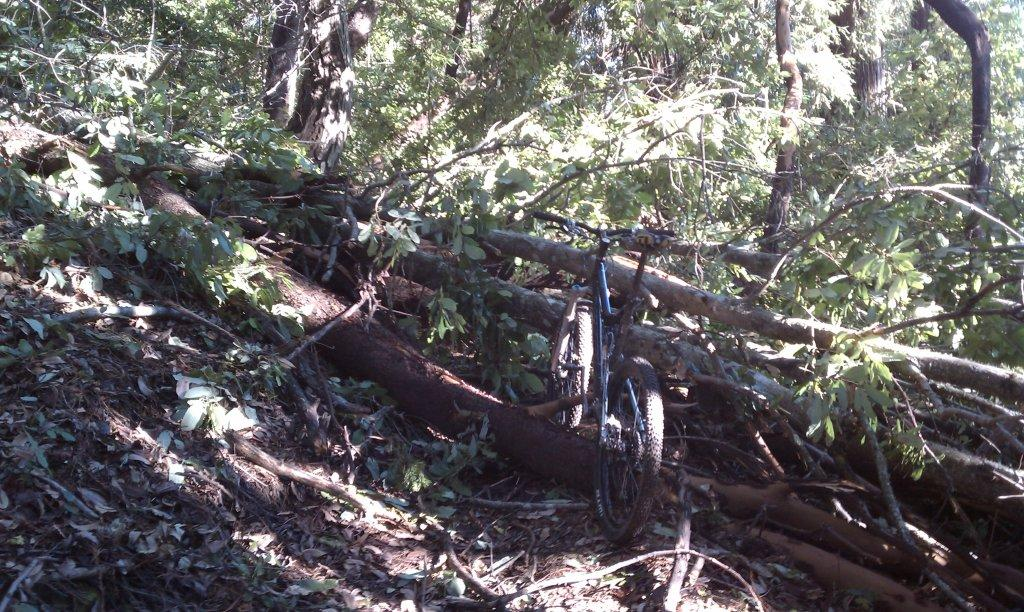 Demo Trail Conditions with photos of large downed trees-saw-pit.jpg