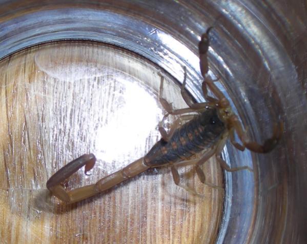 It's scorpion season-scorpion.jpg