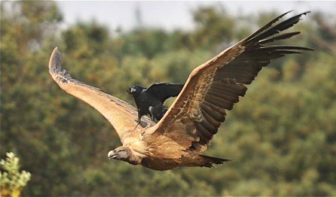 OT: Bird Pix...-screen-shot-2012-09-13-10.00.46-am.jpg