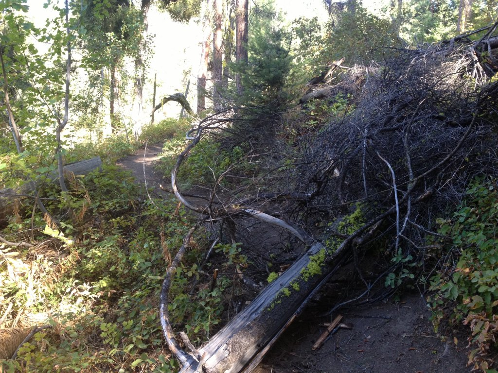 Tree down!-sept513-011.jpg