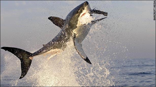 Morbid Fear-shark02.jpg