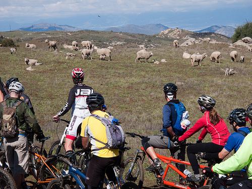 Name:  sheep.jpg Views: 1686 Size:  212.5 KB