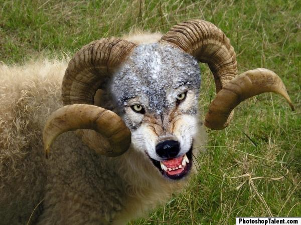 Sorry, time for  a serious thread that actually involves mountain biking-sheep-wolf.jpg