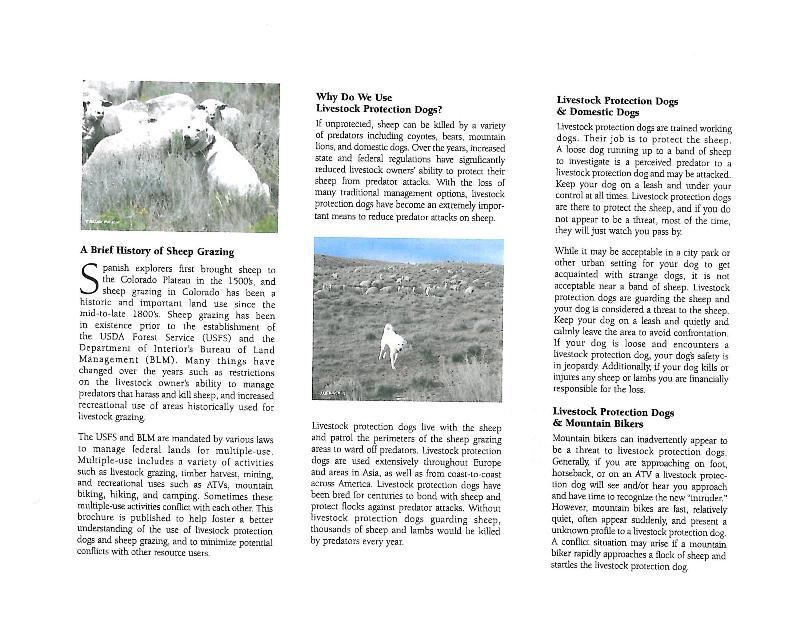 Sheep Guard Dogs and Mountain Bikers-sheepdogs2.jpg