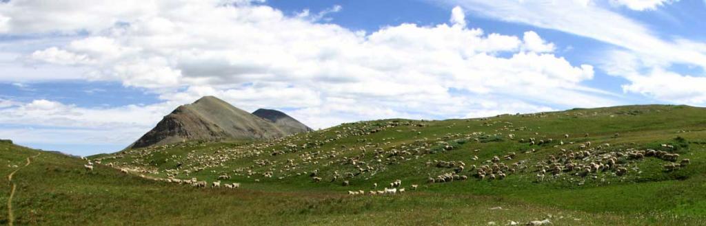 Sheep Guard Dogs and Mountain Bikers-sheepstitch.jpg