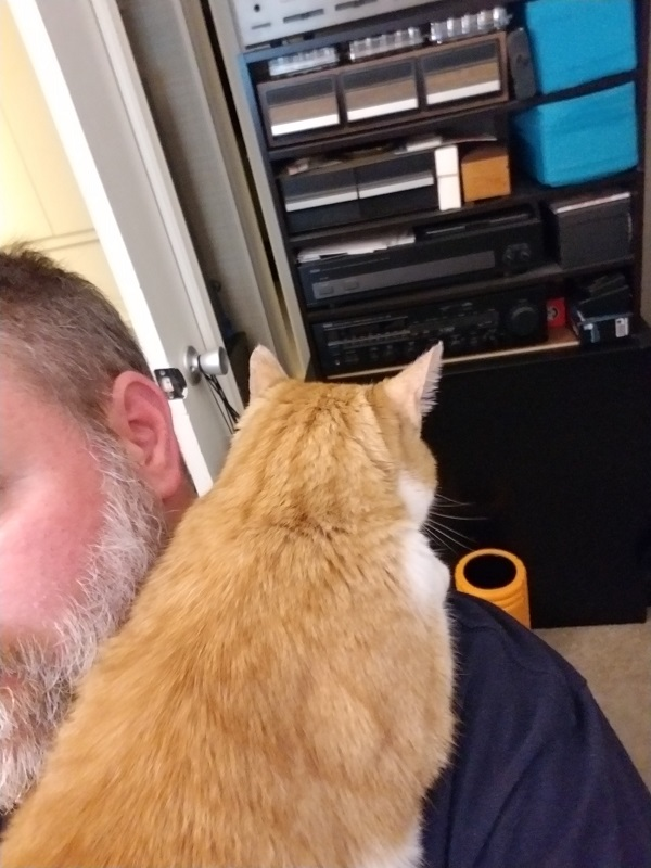 How my Cat feels about everyone being home all day everyday..-shouldercat2.jpg