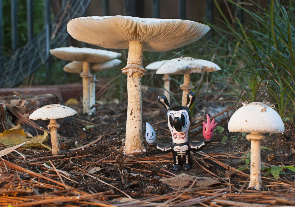 Mushrooms....Post your pics...-shroom_toy.jpg