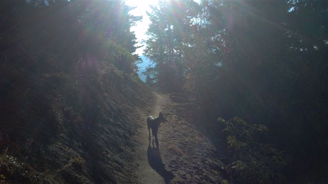 New trails coming to Bogus Basin-simonaroundthemtntrl.jpg