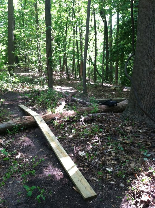 Log ramps: Good? Bad? And how best to build them?-skinny-2.jpg