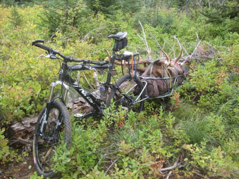 Well, the bob trailer packs out another elk.-skitwitch-2011-005res.jpg
