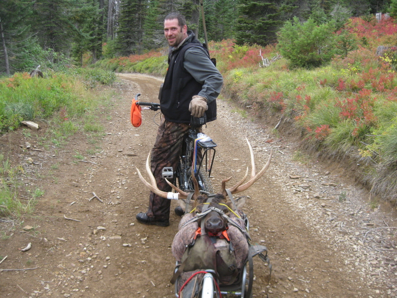 Well, the bob trailer packs out another elk.-skitwitch-2011-008res.jpg