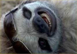 Name:  Sloth.jpg
