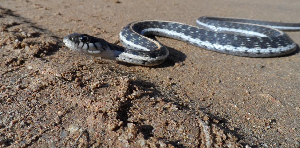 8/24/12: Photo Friday-snake0824.jpg