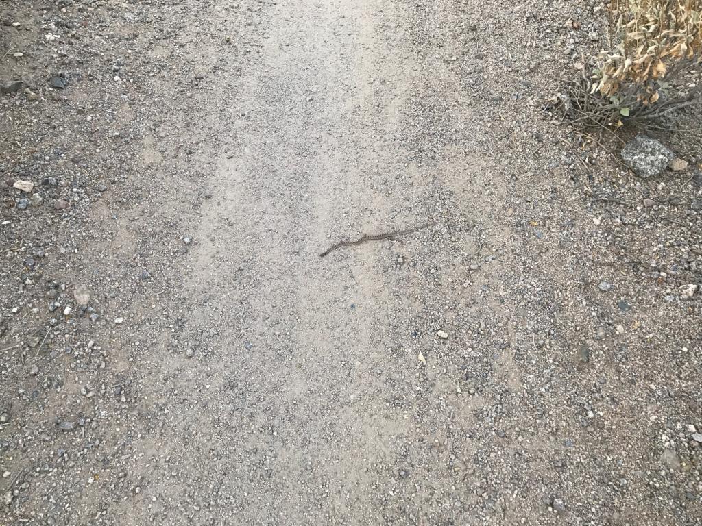 2017: Reptile Encounters-snake1.jpg
