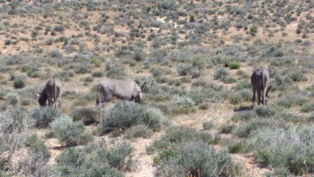 animal encounters-snapchat-1580301128418391825.jpg