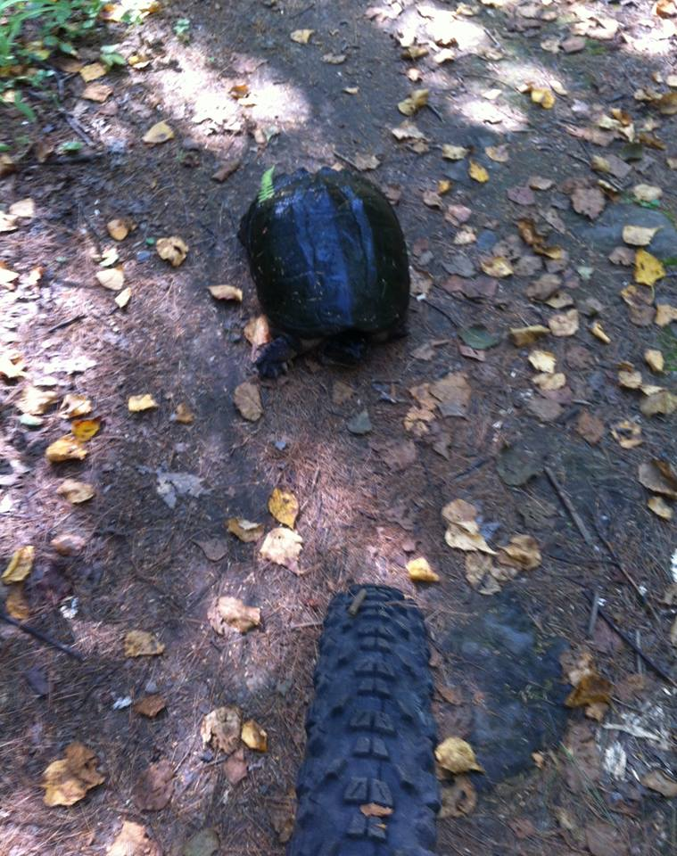 Wildlife you have seen on trail...post your pics...-snapper.jpg