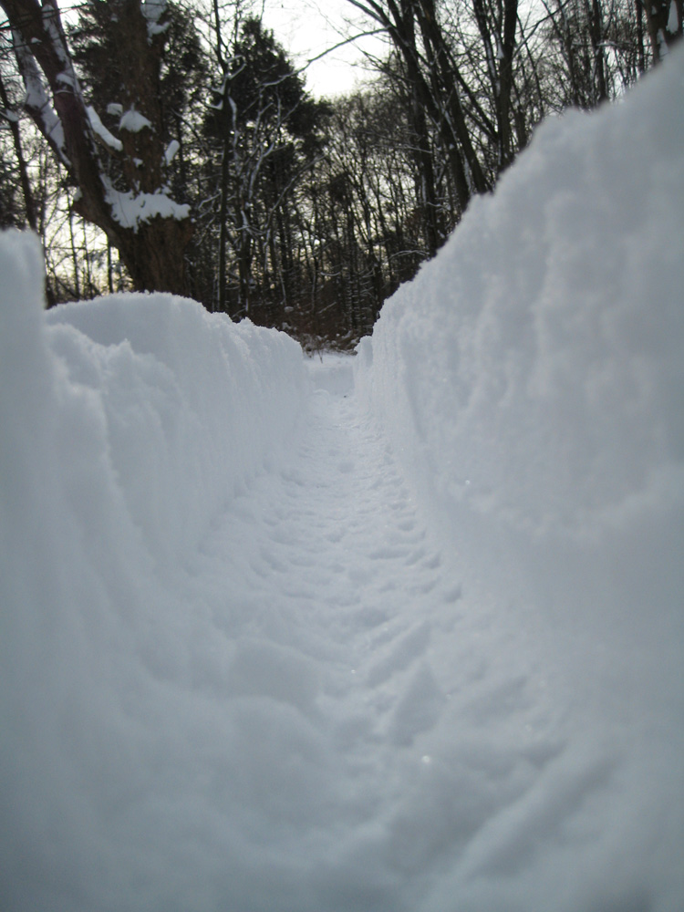 Daily fatbike pic thread-snow-ride-5.jpg